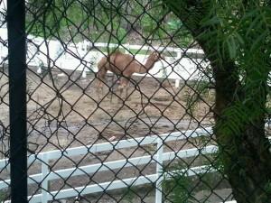 Camel on Mulholland